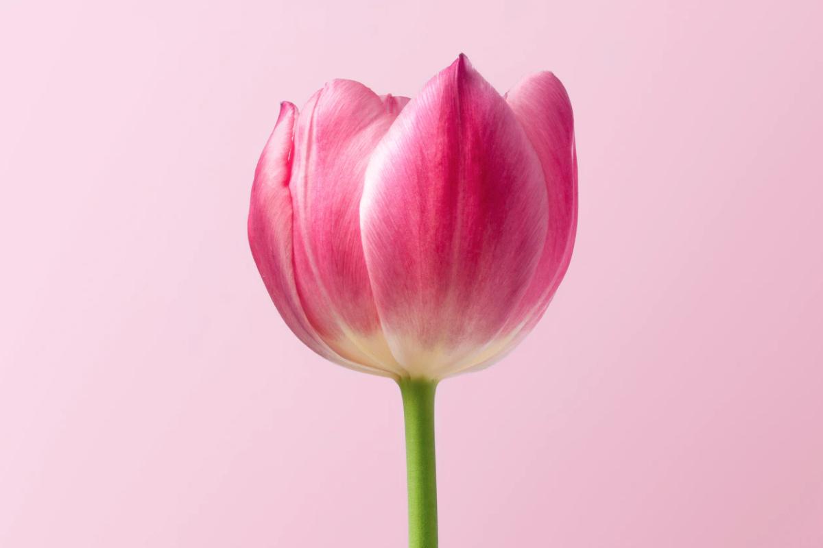 Consejos de un ginecólogo para cuidar tu vagina.